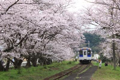 4月:浦ノ崎駅 桜のトンネル