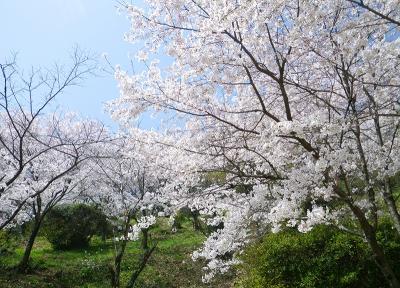 3月-5月:綾部神社宮山の桜・つつじ