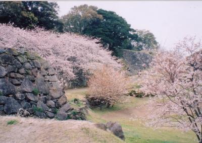 3月-4月:名護屋城跡の桜
