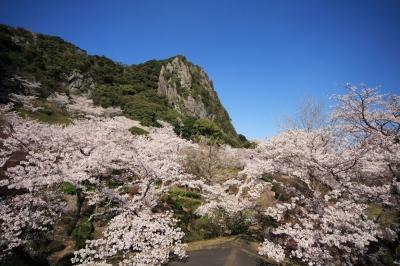 3月-4月:御船山楽園の桜