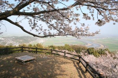 3月-4月:白石町 桜の里のさくら