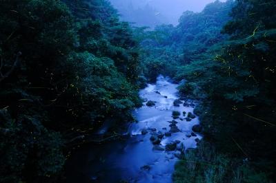 6月:嬉野温泉ホタルバスツアー