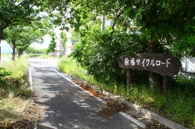 徐福サイクルロードの桜