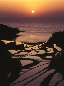 Terraced Rice Fields of Hamanoura