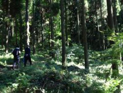 22 世紀アジアの森【オルレ】