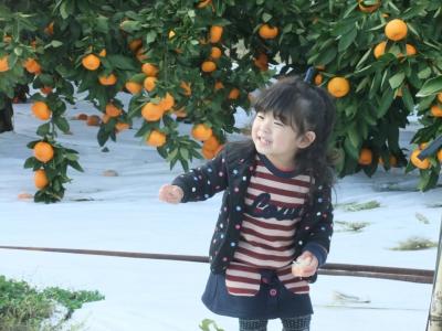 針茂果樹園