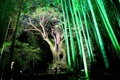Light shows are held at various locations in Takeo city; Take Shrine, The Great Camphor Tree of Takeo, Takeo Onsen Hoyomura and others. At Mifuneyama Rakuen, you may enjoy special light show projected on the pond surface. Join a stamp rally and collect the stamp at each event venue.