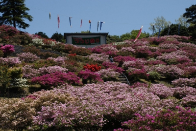 This azalea fair is held in Takenokoba Park when about 10,000 of azalea are in full bloom. There are vegetable markets, open-air concerts as well as bingo games during the fair. You can enjoy the view of islands including Iroha Island in the Imari Bay and Iki & Tsushima Island in the Genkai Sea.