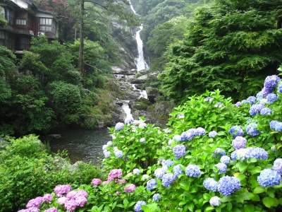 Mikaeri No Taki Falls of Ikisa River consists of male falls and female falls, which are selected as ones of the best 100 falls in Japan. In June, 400 thousand hydrangea in 50 kinds will bloom around the falls and along the lower stream of the river.