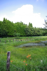 Kashibaru Shitsugen (wetland), also known as