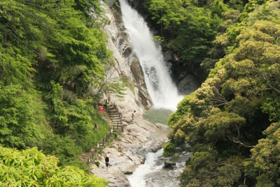 This picturesque scenery has been designated as one of Japan's best 100 waterfalls. There is a walking path along the ravine that consists of 8 waterfalls and pools as well as temples such as Ikume Kan'non temple which is said to heal eye troubles and Fukujyuin Temple.