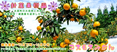 [Orange Picking in Limited Seasons]