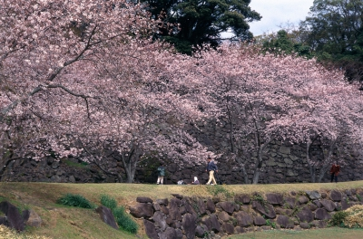 Mar-Apr: Cherry Blossoms at Nagoya Castle Ruins Site