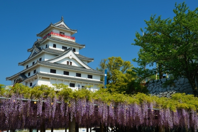 Apr-May:Wisteria of Karatsu Castle