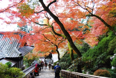 Nov-Dec:Daikozenji's Red Leaves