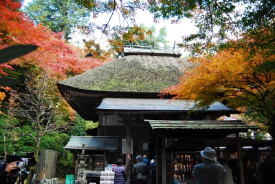 Nov-Dec: Autumn Foliage in Daikouzenji Temple