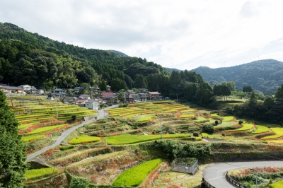 Around the terraced rice fields in the Mt. Eriyama Area, which was listed as one of Japan's best 100 terrace fields and one of Japan's best 100 rural landscapes, flaming red flowers of red spider lily decorate the paths running between the rice fields and enhance the rural scenic beauty especially towards late September.