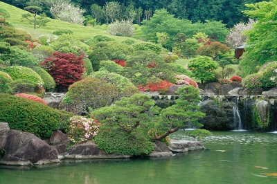 70 cherry blossoms trees, which is said to be the best in Kyushu, in the genuine Japanese garden of about 9,900 square meters will create a beautiful scenery.