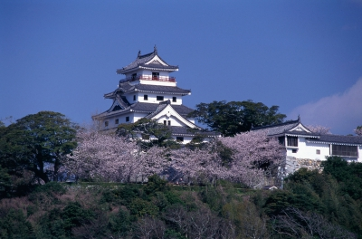 Approximately 220 cherry blossoms trees such as Somei Yoshino bloom in the center of Karatsu castle. The place is crowded with people who come to enjoy the elegant figure of Karatsu castle and cherry blossoms.