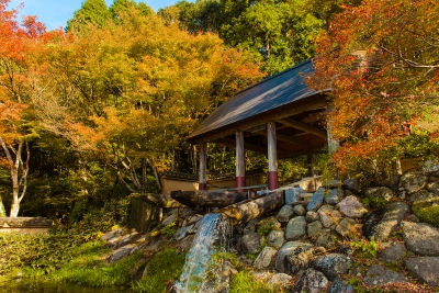 How about taking a walk in Hanyo park while enjoying the autumn leaves and finding your favorite pottery?