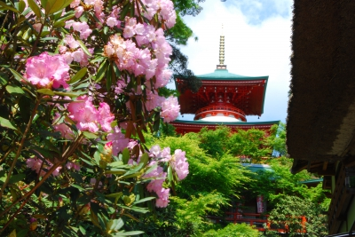 Koyaji Temple, which was established by Kukai, is famous for its shakunage (Rhododendron) flowers. The 300 year old shakunage bush is a magnificent sight to behold and every year in April a Shakunage Festival is held.