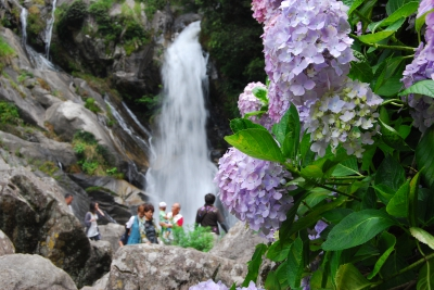 About 40 thousand hydrangea flowers beautifully bloom around the Mikaeri No Taki Falls, which have been selected as one of the best 100 falls of Japan.