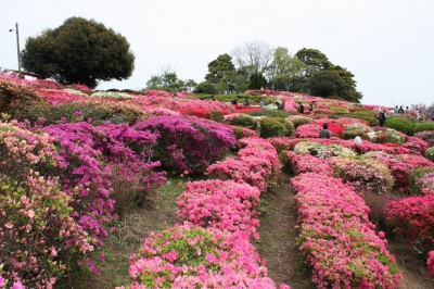 Utagaki park is counted as one of Japan's three major Utagaki venues, where a traditional poem ritual called Utagaki takes place. It attracts a lot of visitors in the seasons of cherry blossoms and azaleas.