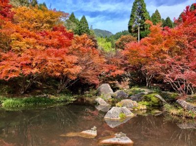 Located at the foot of Sakureizan (altitude of 887m) in Kyuragi Town which is surrounded by nature, you can enjoy walking and watching the leaves turning red and yellow here in mid-November.