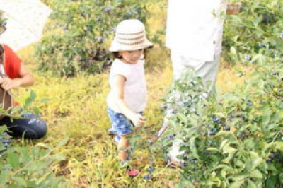 At the farm surrounded by the great nature, you can enjoy picking fruits like blueberries as well as workshops such as  a soba-making workshop, which is available all year round,  that you can eat the soba noodles you made yourself from the homemade buckwheat flour. It is filled with a lot of fun. Come visit us!